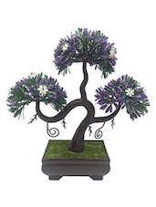 Random S Shaped Bonsai Tree with Purple Leaves and White Flowers -  online shopping for Indoor Plants