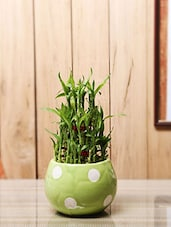 Green Natural Plants & Ceramic Pots Planter - By