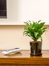 Black Natural Plant And Ceramic  Pots & Planter - By