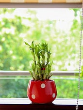 Red Natural Plant And Ceramic  Pots & Planter - By