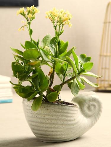 f77a9824274940 Pots   Planters - Upto 60% Off