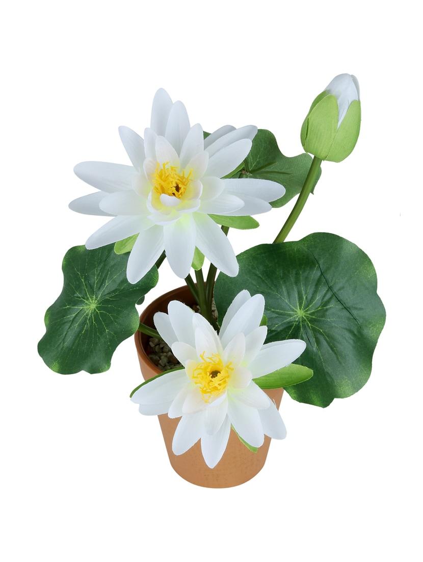 Buy Wonderland Lotus With Plastic Pot Set Of 2 By Gradina Dekor