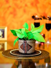Golden Pothos Indoor Plant - By
