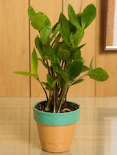 Indoor Plant With Self Watering Planter - By
